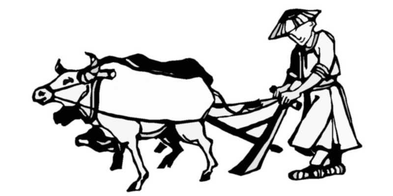 El Chi Kung es comparado al trabajo lento y constante del buey que prepara el terrenos para obtener resusltados