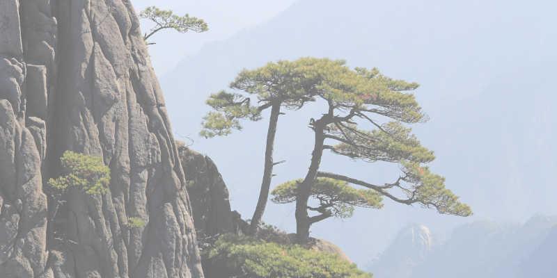 El Qi Gong refleja la armonía de la naturaleza